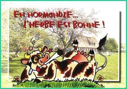 La normandie un paradoxe gastronomique passion genealogie et histoires normandes - Photo de vache drole ...
