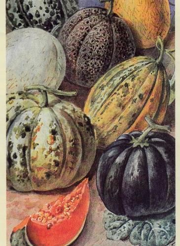melon honfleur 2.jpg