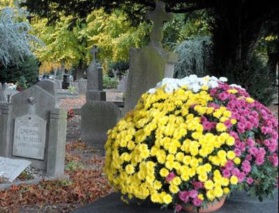 chrysanthème 3.png