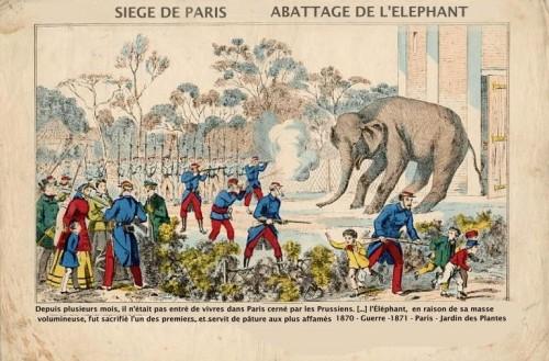 abattage d elephant.jpg