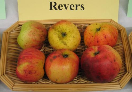 Revers-2.jpg