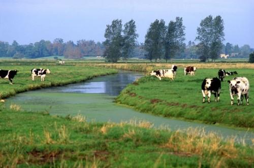 parc-naturel-regional-marais-cotentin-bessin-439462.jpg