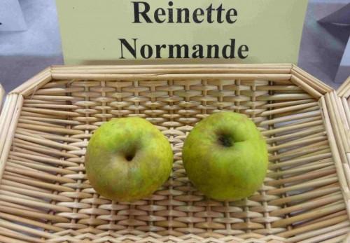 Reinette Normande.JPG