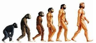 evolution de Darwin.jpg