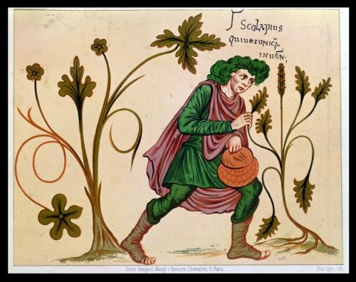 herbes saint jean.jpg