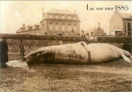 Baleine-de-Luc.jpg